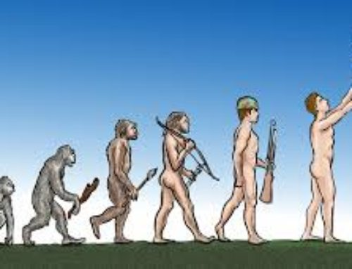 Evolution and Peacebuilding